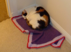 Cat, blanket, blanket, cat.
