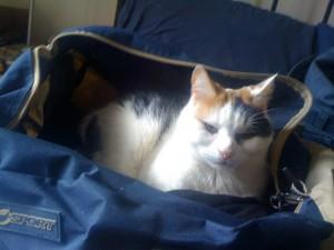 Zut the Cat. In a Bag.